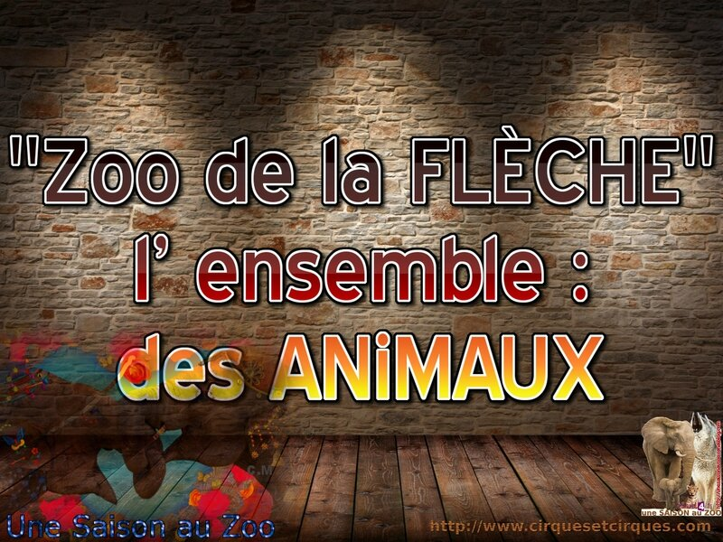 - 0 ANiMAUX DiVERS DU ZOO
