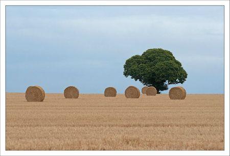 Plaine arbre balles paille 1 100711