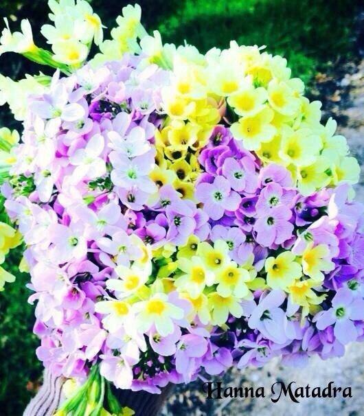 le langage des fleurs : que veut dire une rose, un tournesol ? qu