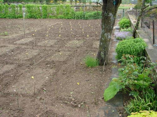 2008 05 27 Mon jardin aprés la pluie