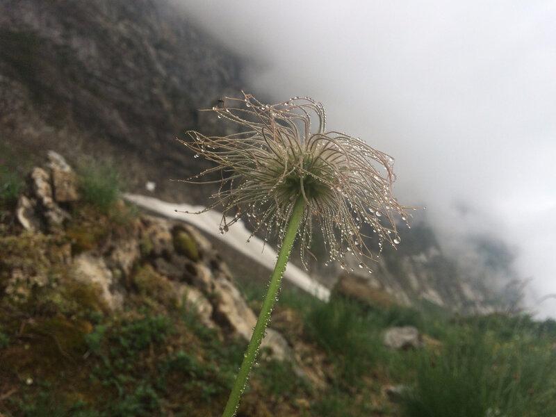folle fleur gouttelée