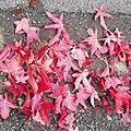 feuilles-106 (1)