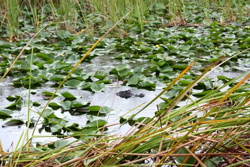 J24 - 21 juillet 2014 Everglades (152).JPG
