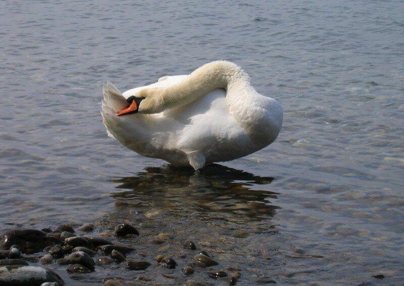Marie Flo au bord du lac 017