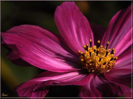 1_a_coeur_de_fleur_rose