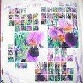 passion: FLEURS & NATURE