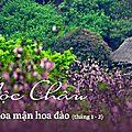 Voyager au vietnam en aout de l'année est belle