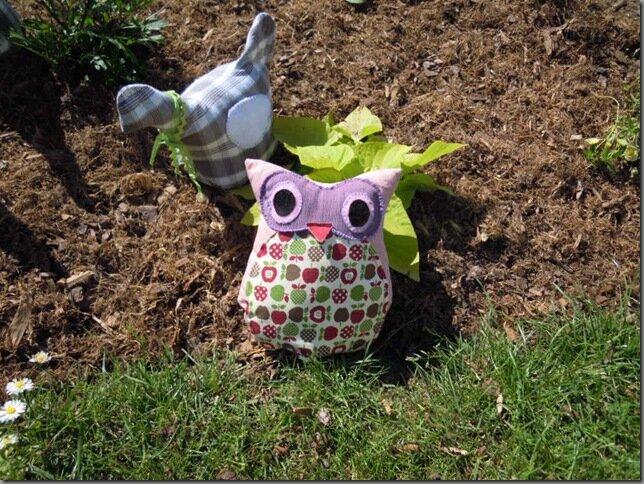 jardin mai 2015 045