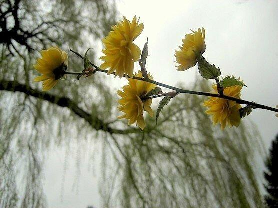 fleurx