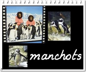 manchots