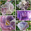 Ciel 10 06 & fleurs (17)