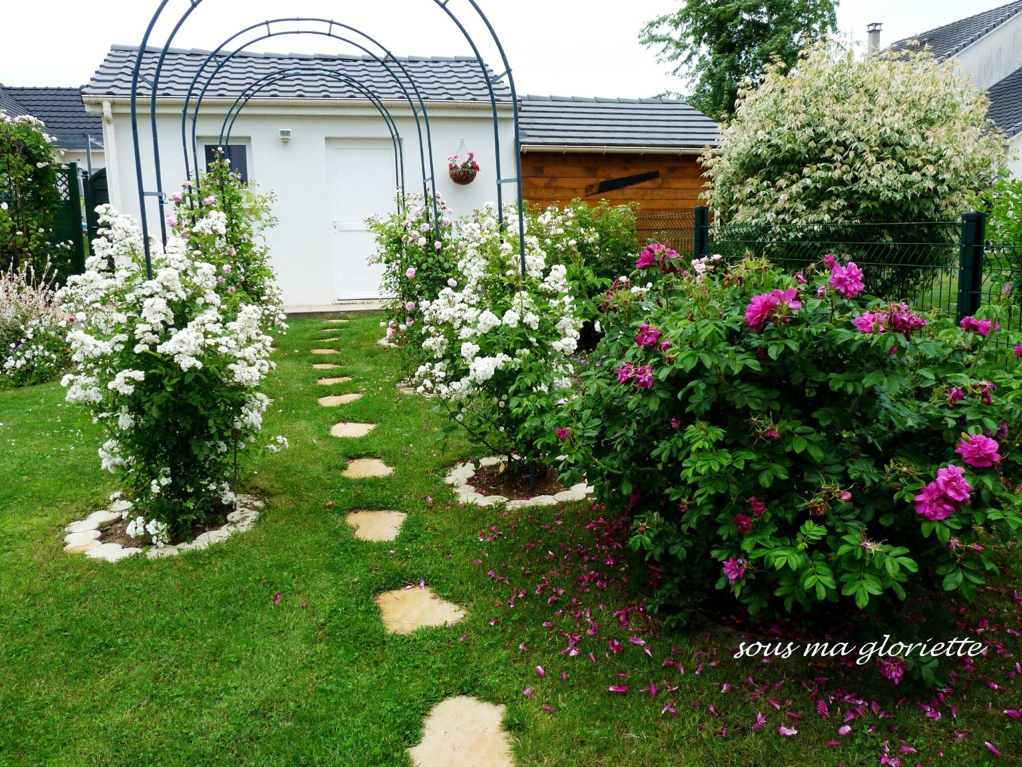 Les roses de mon jardin sous ma gloriette for Cendre de bois au jardin