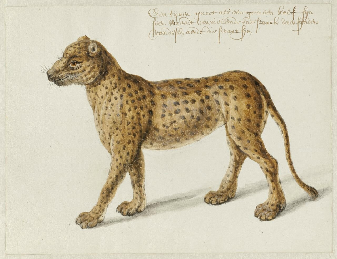 Spectacular discovery of 17th century drawings by Frans Post