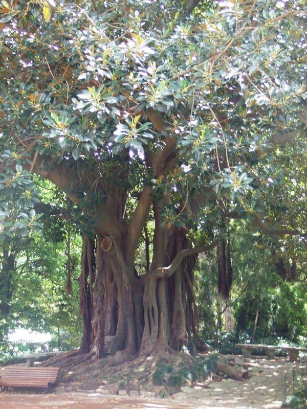 j2 parc arbre