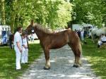 Divine de Cambronnais - 7 Juin 2015 - Concours d'élevage local - Rue