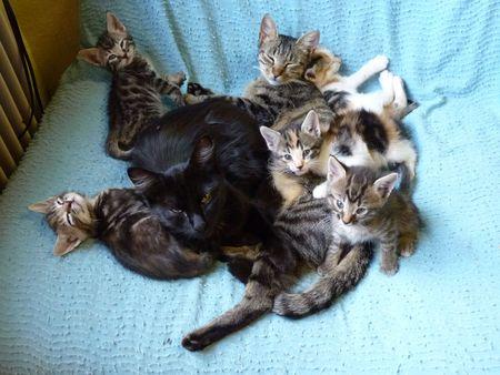 2009_09_10_Les_chatons_sans_leur_propre_m_re