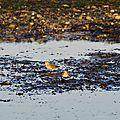 Birding Port Townsend