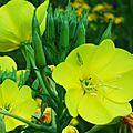 Fleurs de Leon 24061611