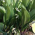 Ses clochettes porte-bonheur symbolisent le printemps...