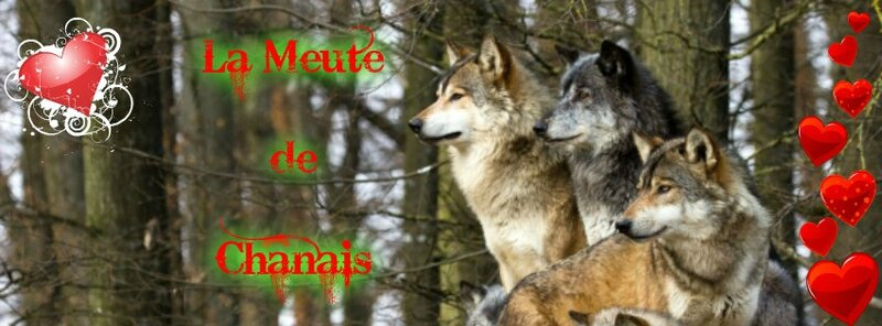 Bandeau Facebook profil 2015