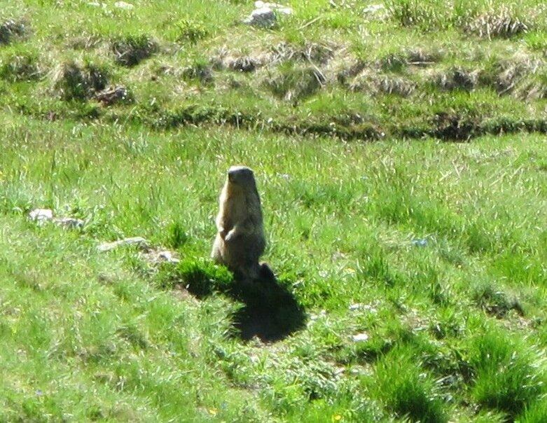 18- Marmotte Sassière