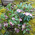 Bouquet au jardin