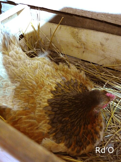 animaux-home-blog-17