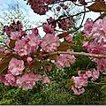 Windows-Live-Writer/Joli-printemps-au-jardin-_601C/20170402_102451_thumb