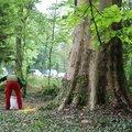 Moment magique a la rencontre regionale d'arboriculture 2015 nord-est de flagey-echezeaux.