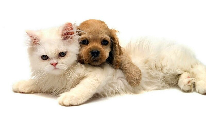 cat-and-dog-cuddling-hd-animal-wallpaper