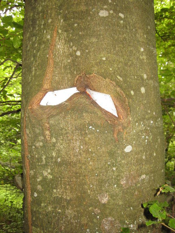 Mystères d'arbres 33