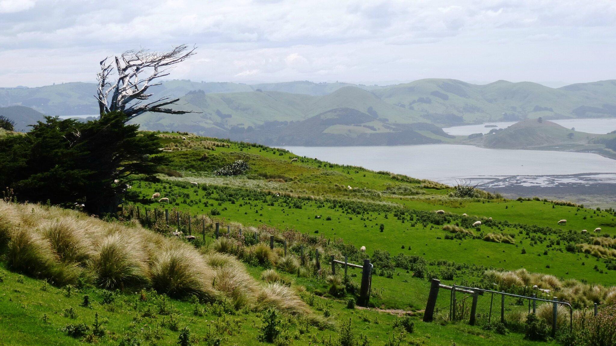 Péninsule d'Otago : Into the Wild