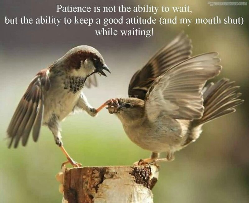 patience-is-not-the-ability-to-wait