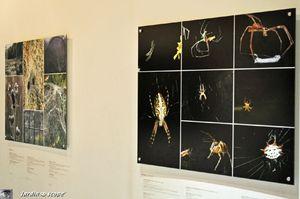 Araignées - Muséum d'histoire naturelle à Paris