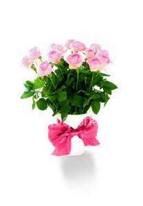 ist2_2682266_pink_roses