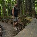Au pied des géants de la forêt