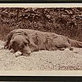 Chien - anonyme