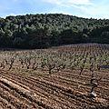 Domaine danjou-banessy, à espira de l'agly