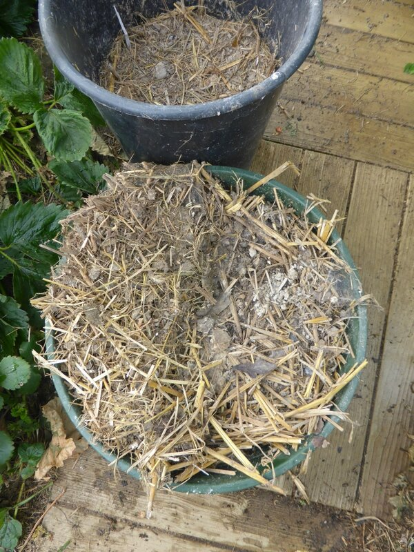 9 octobre une envie de greliner pour planter passion potager. Black Bedroom Furniture Sets. Home Design Ideas