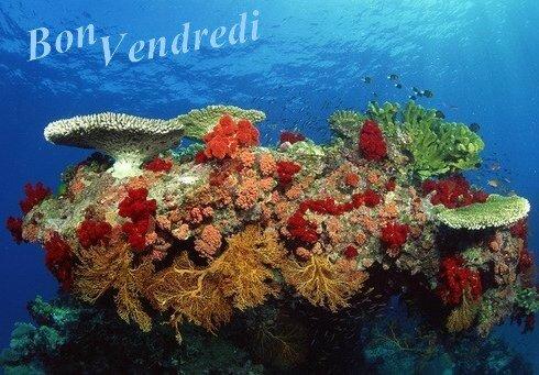 5 b Vend corail BPat