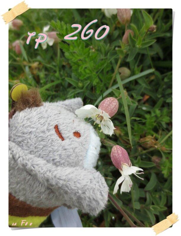 tp 260 (1)