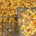 C'est l'automne (hein, quoi?)