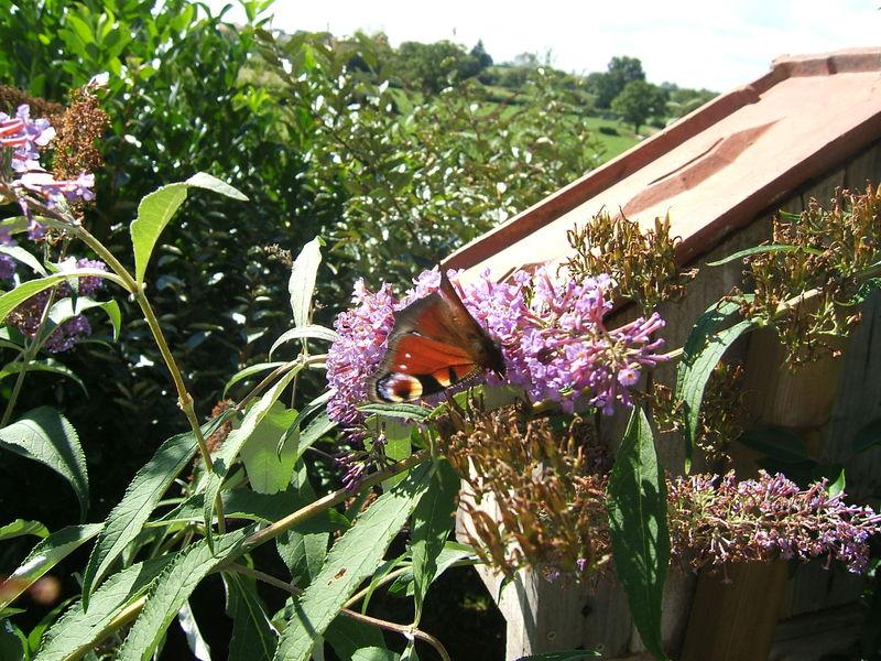 Papillons_010