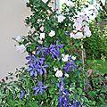 Fleur au jardin 21 06 2012 038