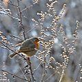 Grand week-end de comptage national des oiseaux des jardins