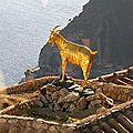 La chèvre d'or