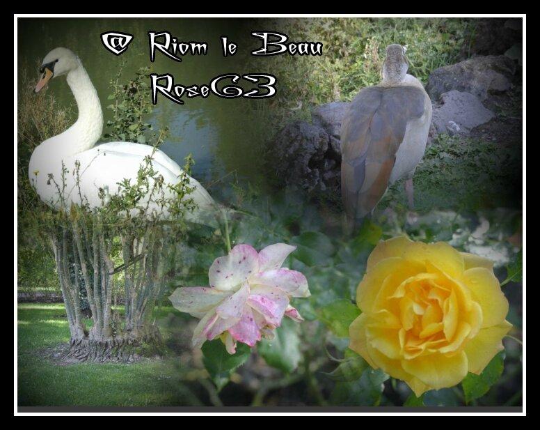 @ RIOM LE BEAU Rose63