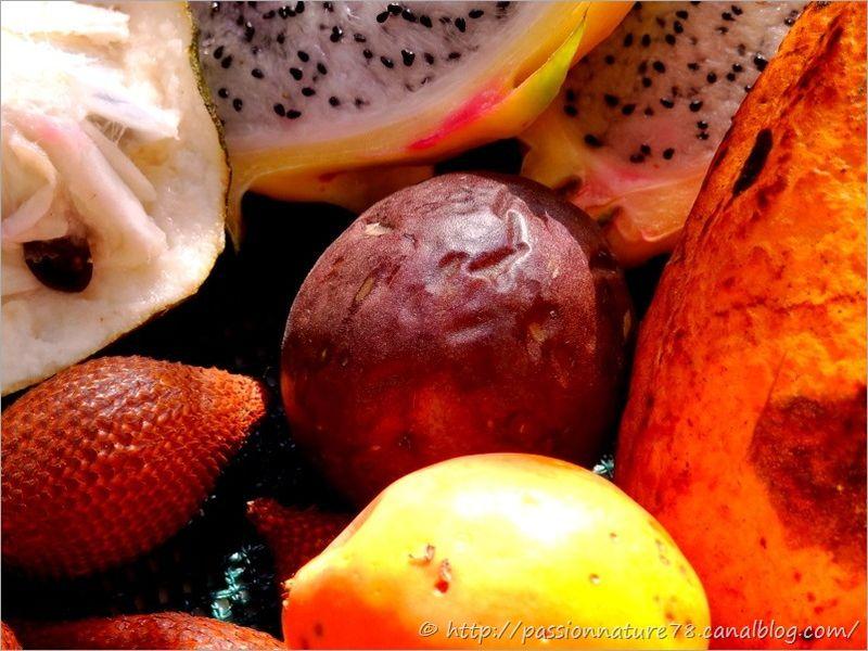 Fruits exotiques (16)