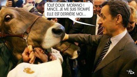 Sarkozy - vache