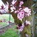Les beautés du printemps !!